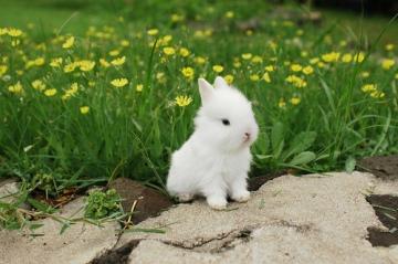 bunny-cute-601-1